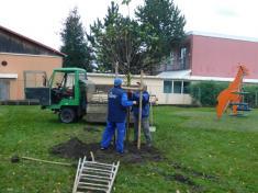 Sázení stromů na školní zahradě